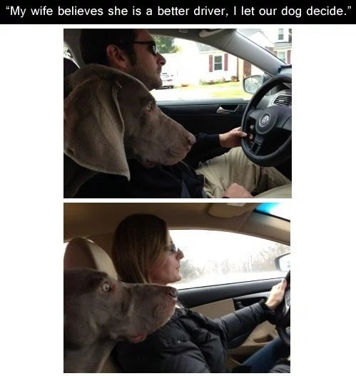 Who Drives Best
